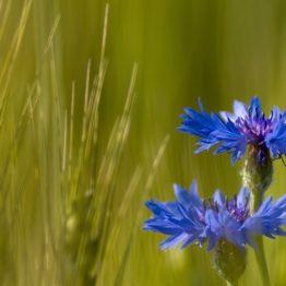 """Collection """"L'esprit des fleurs"""""""